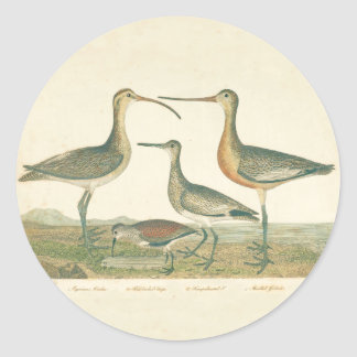 Antique Bird Print Marsh Coastal Classic Round Sticker