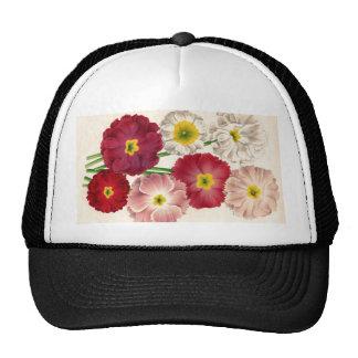 Antique Botanical Primroses Print Hat