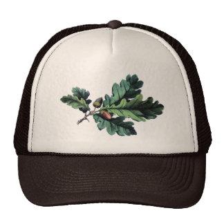 Antique Botanical Print Oak Leaves Acorns Mesh Hat
