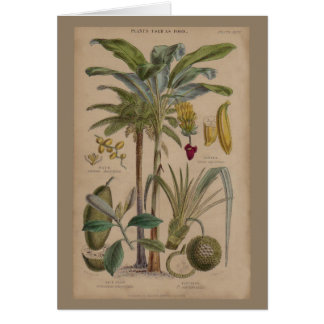 Antique Botanical Print - Tropical Fruit Card