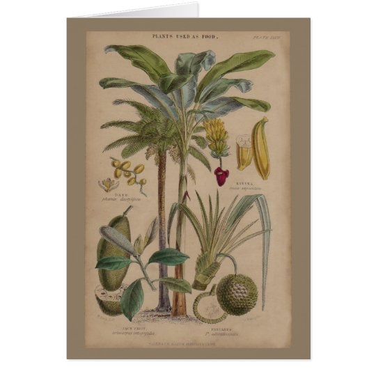 Antique Botanical Print - Tropical Fruit Card