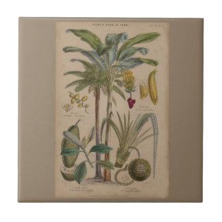 Antique Botanical Print - Tropical Fruit Ceramic Tile