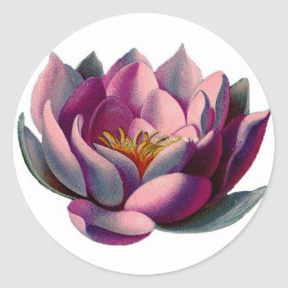 Antique Botanicals Pink Water Lily Lotus Stickers