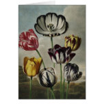 Antique botanicals tulips on notecards note card