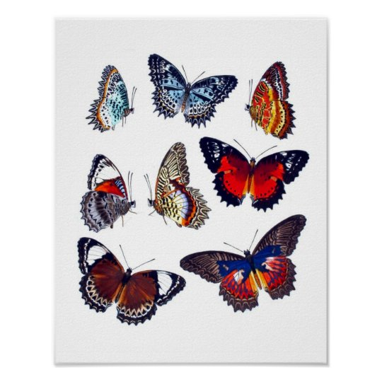 Antique Butterfly Natural History Art Print no.12