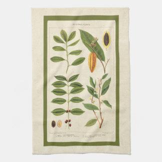 Antique Coffee Tea Botanical Beverage Plants Chart Towels