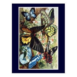 Antique Exotic butterflies butterfly illustration Postcard