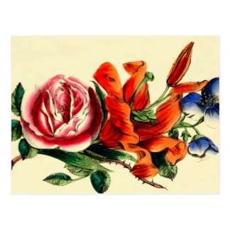 Antique Floral Red Lily Rose Bouquet Still Life Postcard