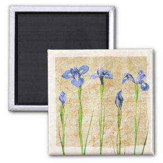 Antique Irises - Vintage Iris Background Customize Magnet