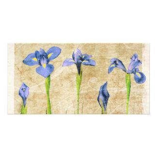 Antique Irises - Vintage Iris Background Customize Personalised Photo Card