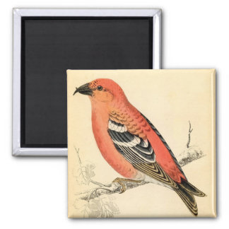 Antique Natural History Finch Pink Crossbill Bird Magnet