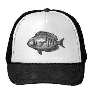 Antique Natural History Fish Engraving Hats