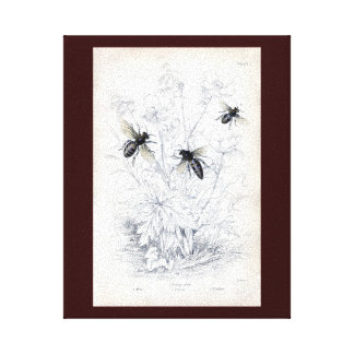 Antique Natural History Print Honey Bees Stretched Canvas Print