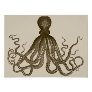 Antique Octopus Poster