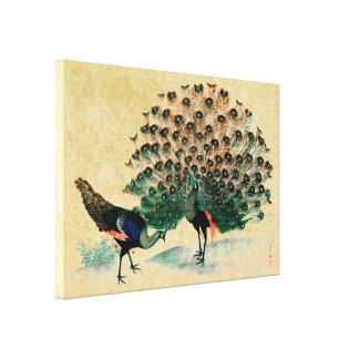 Antique Peacock Peafowl Canvas Prints