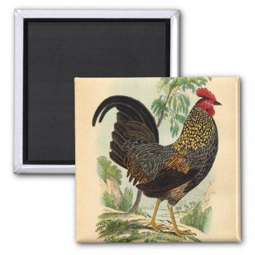 Antique Print Vintage Rooster Cockerel Refrigerator Magnets
