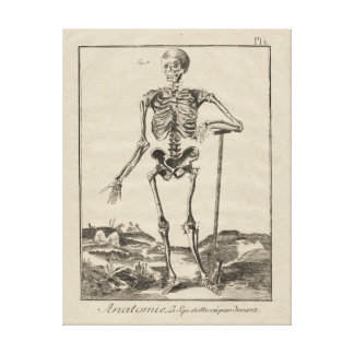 Antique Skeleton from Diderot's Encyclopaedia Canvas Print
