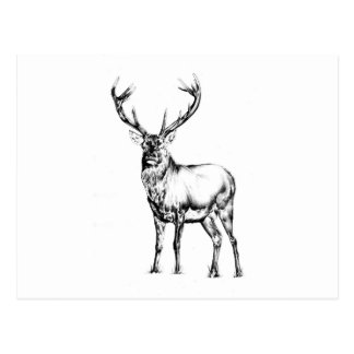 Antique stag art drawing handmade nature postcard