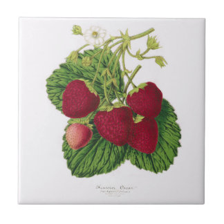 Antique Strawberry Print Ceramic Tile