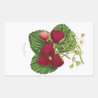 Antique Strawberry Print Sticker