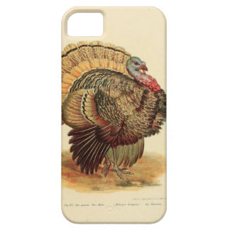 Antique Turkey illustration Thanksgiving iPhone 5 Covers
