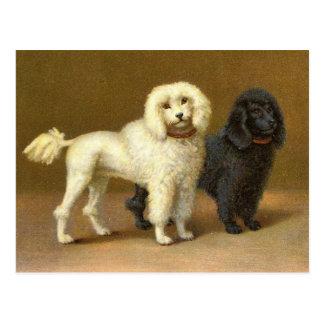 Antique Victorian Poodle Dogs Postcard