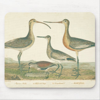 Antique Water Birds Marsh Illustration Mouse Pad