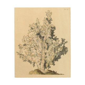 Antique Watercolor Coral Wood Print