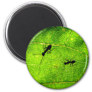 Ants Green Acre Magnet