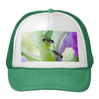 Ants In My Plants Hat