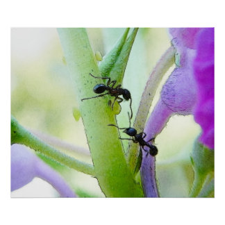 Ants In My Plants Poster