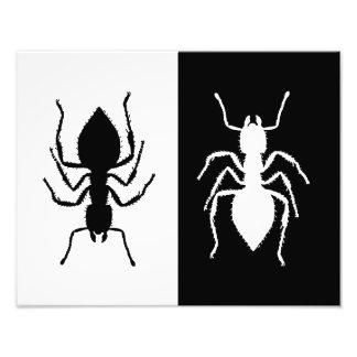 Ants Photographic Print