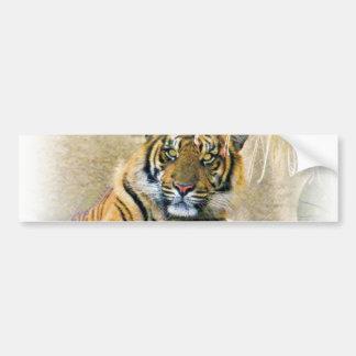 any Occasions,Tiger Cub_ Bumper Sticker