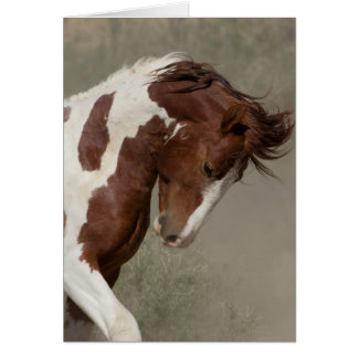 Apache's Portrait Wild Horse Greeting Card