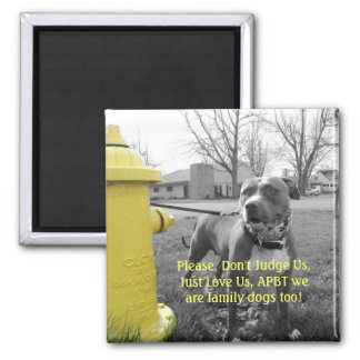APBT American Icon & Family dog Square Magnet