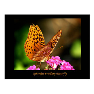 Aphrodite Frittilary Butterfly Post Card