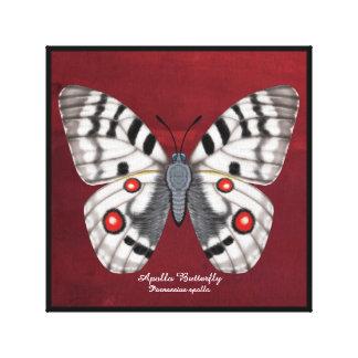 Apollo Butterfly Canvas Print