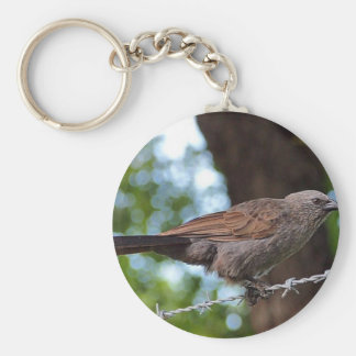 Apostlebird on barb wire round button keyring basic round button key ring