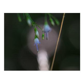 Appalachian Bellflower Blue Wildflower Postcard
