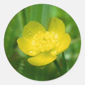 Appalachian Buttercup Stickers