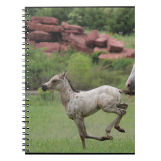 appaloosa foal notebook