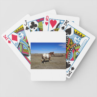 Appaloosa horse on summer prairies bicycle playing cards