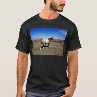 Appaloosa horse on summer prairies T-Shirt