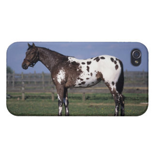 Appaloosa Horse Standing Case For iPhone 4