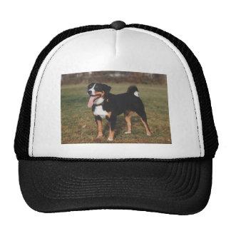 Appenzeller Sennenhund Dog Cap