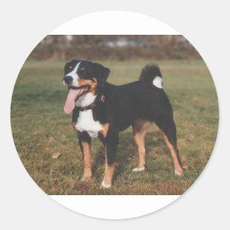 Appenzeller Sennenhund Dog Classic Round Sticker