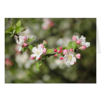 Apple Blossom Branch Card