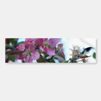 Apple Blossom Bumper Sticker