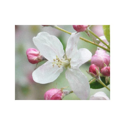 Apple Blossom Gallery Wrap Canvas