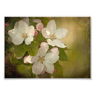 Apple Blossom Cluster Photo Print